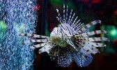 Евпаторийский аквариум Хищная зубатка