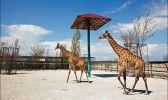 Сафари парк Тайган Жирафы